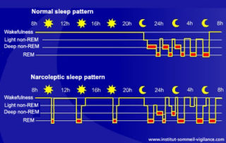 Normal sleep pattern